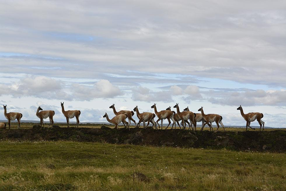 2<sup>e</sup> Route des Andes 2018